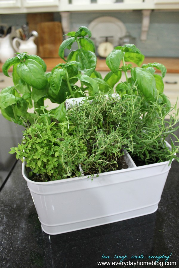 This darling herb planter can be adapted for a centerpiece for a wedding, a reunion or even an anniversary party or gifts!