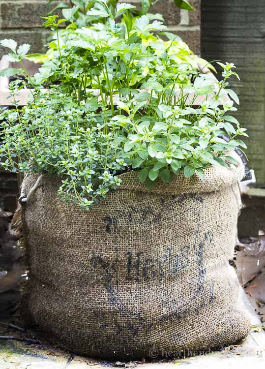 Make an inexpensive herb garden in a burlap sack. Enjoy the rustic, quick draining quality of burlap to grow a kitchen herb garden all season long.