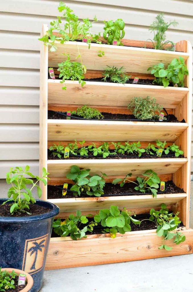 This DIY vertical garden is the perfect small space garden solution. This cedar vertical garden has a lot of space to grow your favorite herbs and plants. And the built in drip watering system will help make watering your vertical garden even easier.