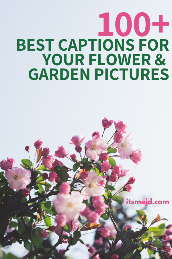 100+ Perfect Flower and Garden Captions To Make You Smile #flowerquotes #gardenquotes #flowercaptions #gardeningquotes #flowerpuns #gardeningpuns #gardeningcaptions