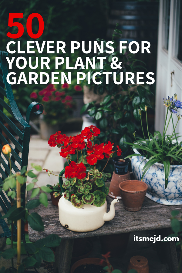 50 Funny Plant And Garden Puns That Are Too Clever For Their Own Good #gardeningcaptions #gardenpuns #gardeningpuns #gardenquotes #gardeningquotes #plantpuns